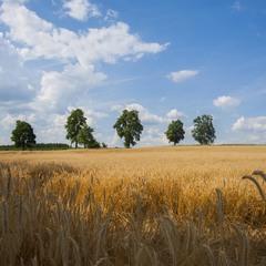 В поле летнем ...