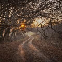 По дороге к утренней звезде ...