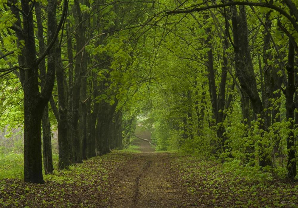 это картинки лесной аллеи того