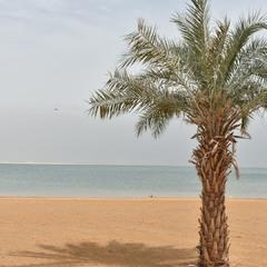 Пальма на березі мертвого моря