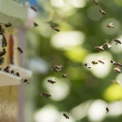 Бджолиний рай