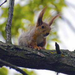 Ты мои прошлогодние орешки не видел?