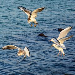 Морские охотники, или фигуры высшего пилотажа