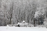 Свіжий сніг
