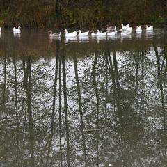 На сільському ставку