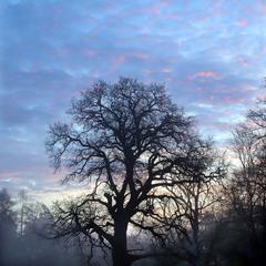 досвітній туман
