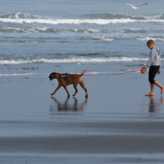 Прогулянка берегом моря