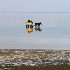 Жовта бричка на Північному морі