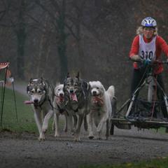 Собачий марафон