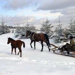 По свіжому сніжку