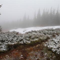 Весняний туман у горах