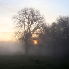 Стелиться вранішній туман