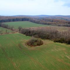 Зеленіють поля