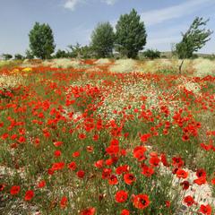 Літо в Туреччині