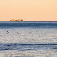 морские лебеди )