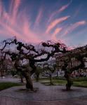 Причудливые деревья на закате