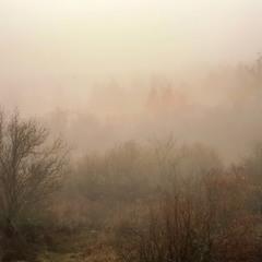 Туманные волны