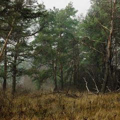 В глубине леса