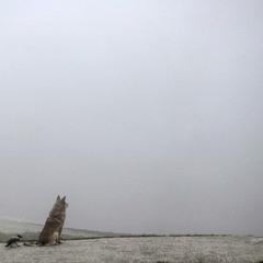 За туманом нічого не видно )