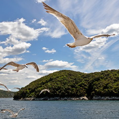 Летели чайки над водой, их песни жалобно звучали...