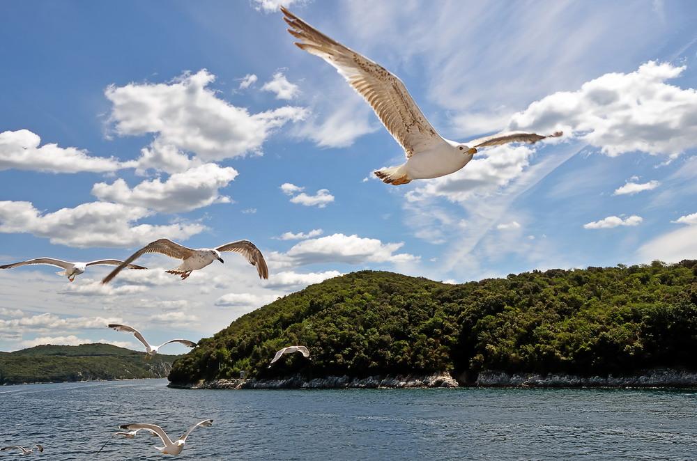 фото летящих чаек над морем сегодня