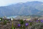 Квіти та гори
