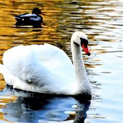 Красавец на озере