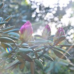 Серебристый смех Весны