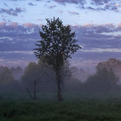 Туманним ранком на полi