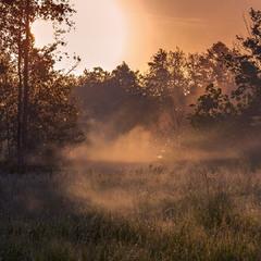 Сонячним ранком на полi