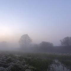 Туманний світанок