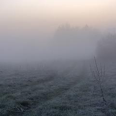 Ранковий господар польових стежок