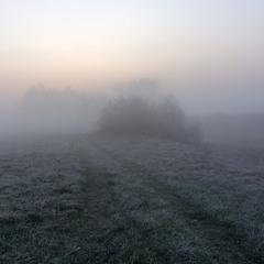 Ранковий володар природи