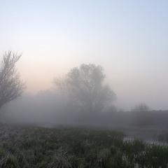 Заміський ранок в тумані
