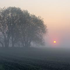 Туманні польові світанки