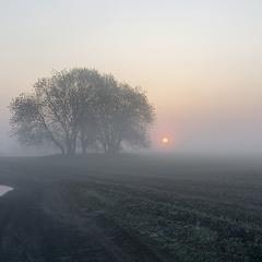 Туманний ранок на полі