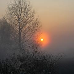 Туманне сяйво