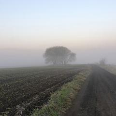 Ранок на полі