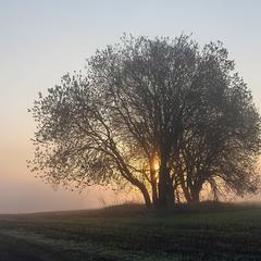 Ранковий велетень в тумані