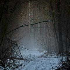 Містичний ліс