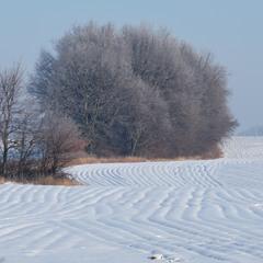 Морозні польові хвилі