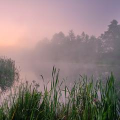 Туманний спокій ранку