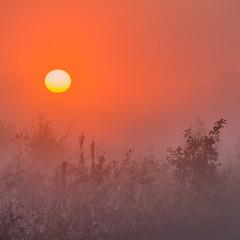 Ранкові польові світанки