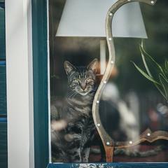 Кіт в вікні