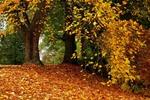 Осенние листья шумят и шумят..