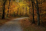 Осенние дорожки.