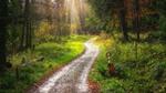 Свежестью разум дурманит oсенью сказочный лес. И за собой в чащу манит, полную разных чудес.