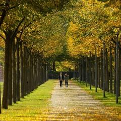 Двое и осень
