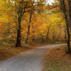 Осень, дорожки..