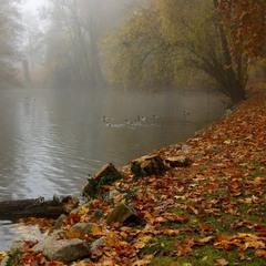 Совсем недавно осень, туманами стелила..